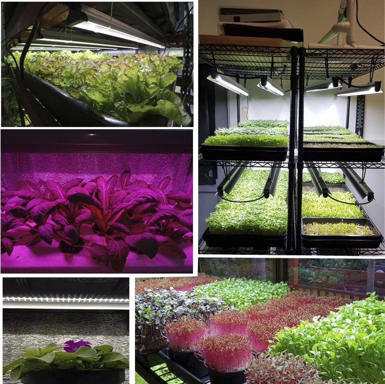 hydroponics microgreen seeds growing light plant propagation trays