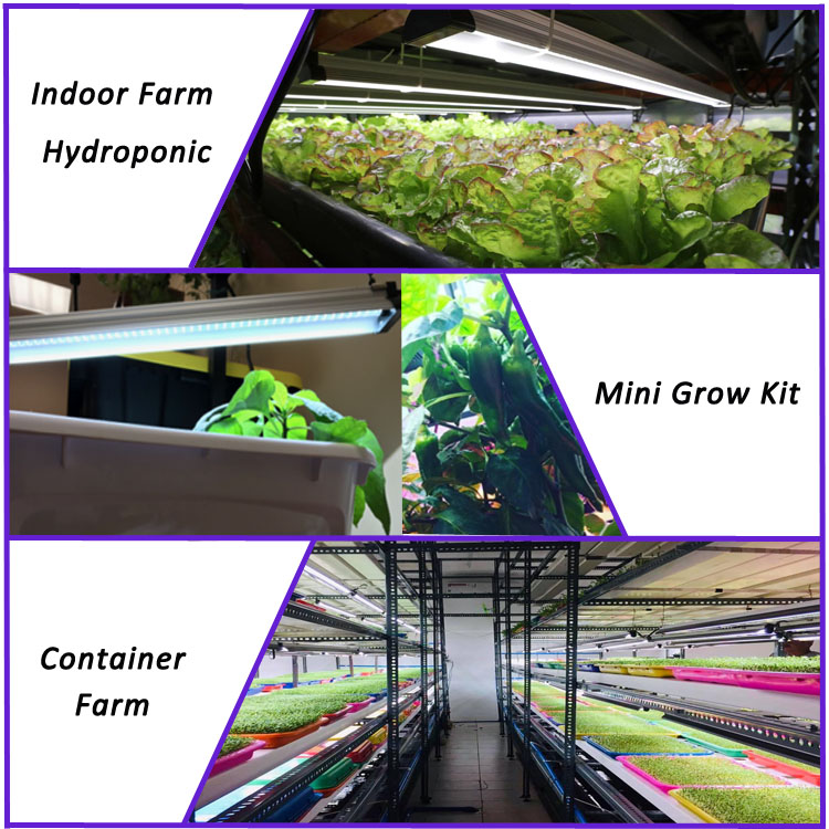 indoor vertical hydroponic strawberry led lamp light aeroponics aquaponics growing systems for home
