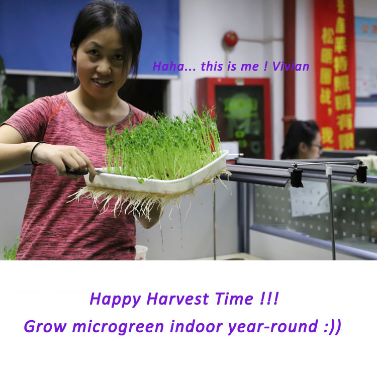 hydroponics microgreen seeds growing light plant propagation trays